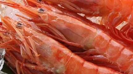 product-images-red-prawns